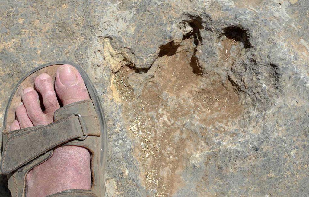Empreinte de pas de dinosaure dans le rocher.